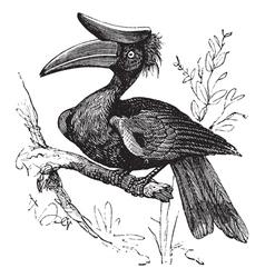 Rhinoceros Hornbill vintage vector