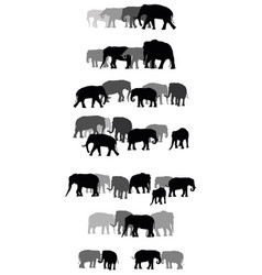 Set of group of elephants vector
