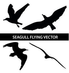 set of silhouette seagull flying 4 in 1 on white vector image