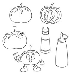 set of tomato and tomato ketchup vector image