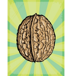 background with walnut vector image vector image