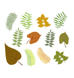 different types of plant leaves delicate color vector image