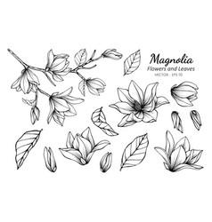 Collection set of magnolia flower and leaves vector