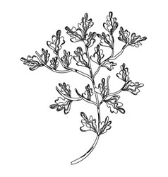 contour nice plant decoration botany vector image