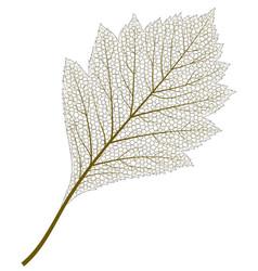 Image skeleton aspen leaf vector