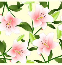 Lilium candidum the madonna lily or pink lily on vector