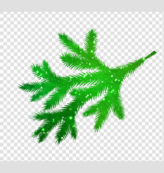 spruce branch silhouette vector image