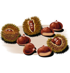 Urchin open chestnuts vector