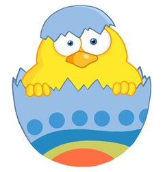 Yellow Easter Chick In A Blue Shell vector