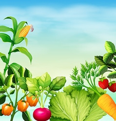 Many types of vegetables vector image