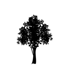 black silhouette of deciduous tree icon isolated vector image
