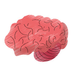 drawing brain idea human organ vector image