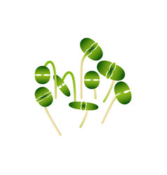 Microgreens basil bunch of plants white background vector