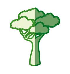 drawing tree natural plant design image vector image