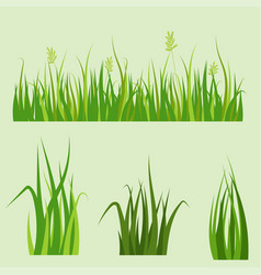 green grass border plant lawn nature meadow vector image