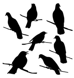 birds at tree branch vector image