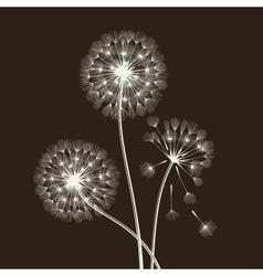Blowball seeds vector
