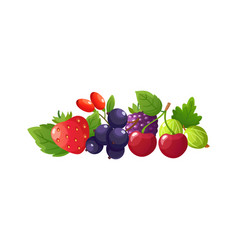 fresh berries composition isolated cartoon berry vector image