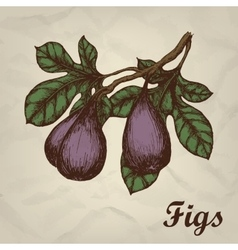 Branch with figs hand drawn vintage style vector image vector image