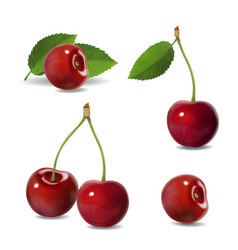 cherry realistic fruit icons vector image