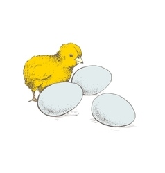 egg and chicken vector image