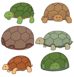 Set of turtle vector