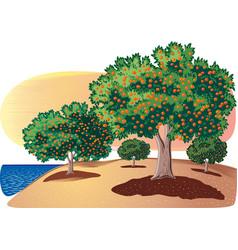 Citrus grove sea vector