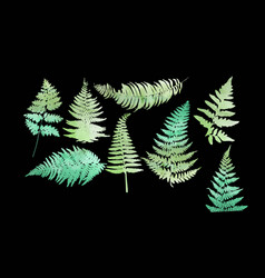 Close up 8 leaf fern isolated on black background vector