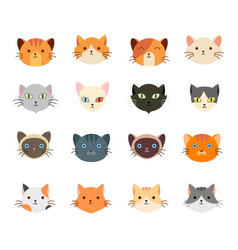 collection cute cat head with many face vector image