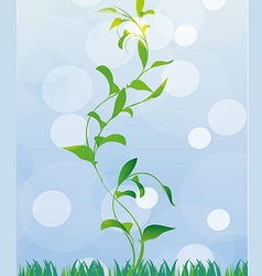 first spring sprout vector image vector image