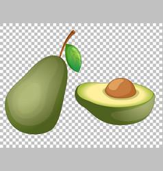 Avocado cartoon style isolated vector
