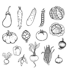 hand drawn fresh organic vegetables set vector image
