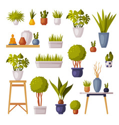 houseplants collection potted plants and vases vector image