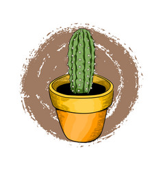 houseplants green cactus in a bright flower pot vector image