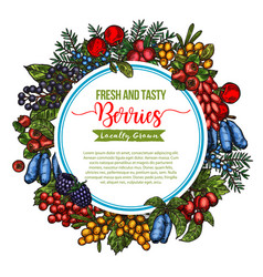 natural fresh tasty berries sketch poster vector image