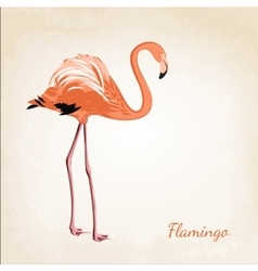 Beautiful pink flamingo bird isolated vector image