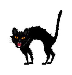 halloween growl black cat vector image