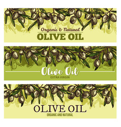 Olive oil banner with border of green fruit sketch vector