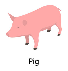 pig icon isometric style vector image