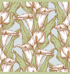 seamless background drawn calla lilies vector image