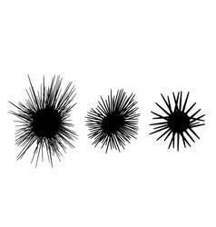 Set sea urchin icon in silhouette style vector