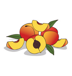 Isolate ripe peach fruit vector