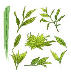 colourful set of tea leaves elements set vector image