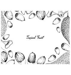 Hand drawn frame of buah dabai and cempedak fruits vector
