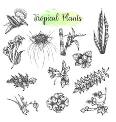 tropical collection with exotic flowers and leaves vector image