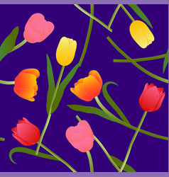 colorful tulip on blue violet background vector image vector image
