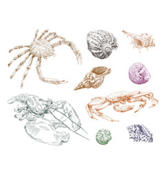 Crabs and seashells hand drawn set vector