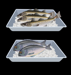 Fish in container boxes vector