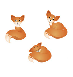 fox isolated on white vector image