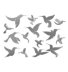 Icons colibri humming bird vector